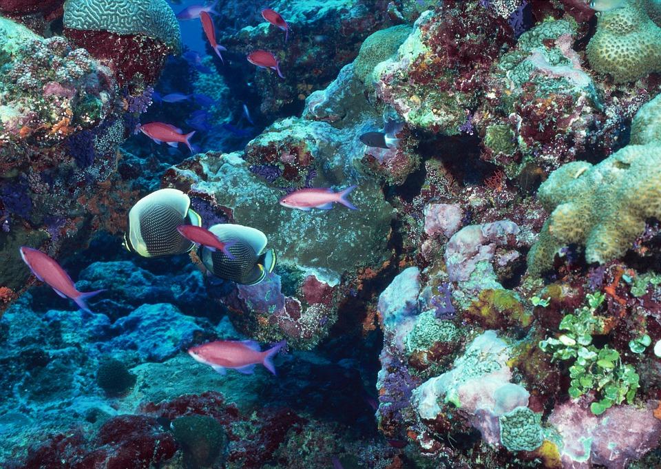 reef akvaryumu